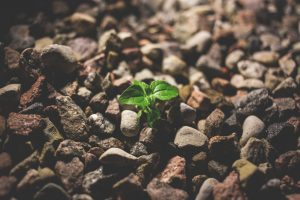 Plant growing through rocks like people grow through rough times with counseling. Individual counseling for children, teens & adults in Roswell, GA. Parent coaching available. 45226