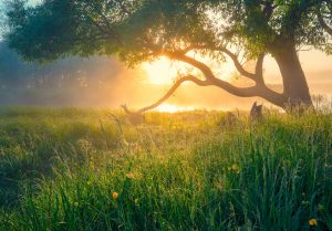 Photo of a Tree | Anxiety & Depression Treatment | Wellview Counseling | Roswell, GA 30076